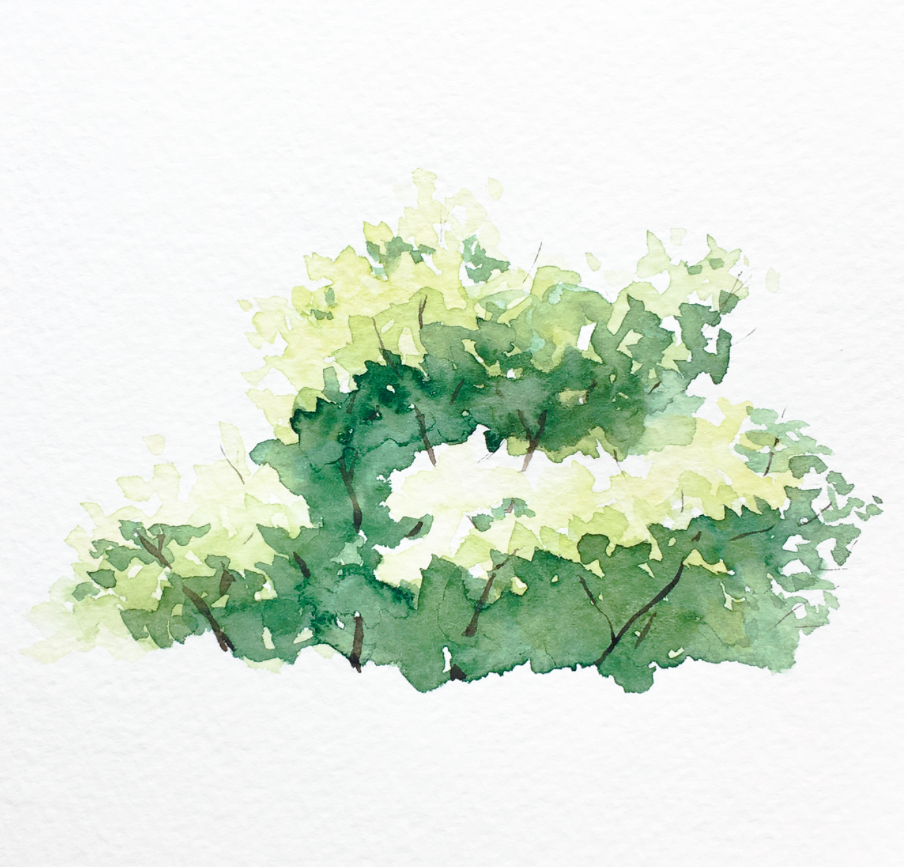 Watercolor Bushes and Trees in 4 Easy Steps – reFine Art Blog